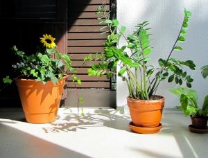 betonimaali parvekkeelle kukkapurkkien alla